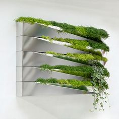 This product combines a mirror and nature. Bright green grass blended with mirror surfaces looks very modern and stylish. Such mirror flower pots easily could decorate any wall and become an excellent addition to any interior design. Every pot presents it Plant Wall, Plant Decor, Deco Design, Wall Design, Design Room, Design Design, House Design, Indoor Window Boxes, Landscape Design