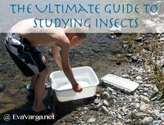 The Ultimate Guide to Studying Insects - Eva Varga