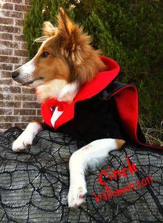 dog halloween costume contest clemopatra dog halloween costumes pinterest dog halloween dog and animal