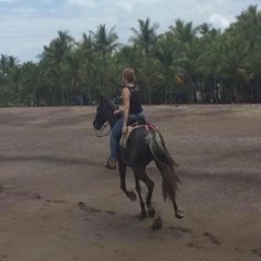 Horses, Vacation, Animals, Vacations, Animales, Animaux, Animal, Holidays Music, Animais