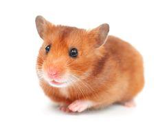 Is It Worth It? Animal Testing, Animal Cruelty, Cruelty-Free Shopping