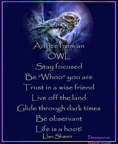 They are wise creatures, those owls.