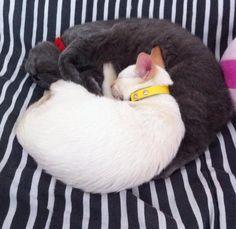 Mini gatíneos fofos! <3 Pickles e Pudim quando ainda eram baby gatinhos.