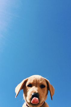 Animal Wallpaper - Hello my page Tier Wallpaper, Dog Wallpaper, Animal Wallpaper, Puppy Wallpaper Iphone, Cute Puppies, Cute Dogs, Dogs And Puppies, Cute Babies, Doggies