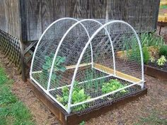 Garden Fencing .. maybe do something like this with netting over the top to keep birds and squirrels out...if the cat doesn't earn his keep anyway...;)