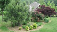 I like the roll of the plants and a Blue Spruce tree would look good in there