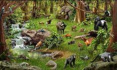 Orman Canlıların Yaşam Alanı