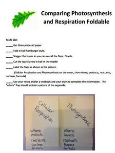 Science in the City: Freebie: Photosynthesis and Cellular Respiration