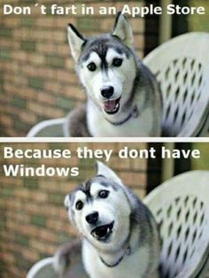 I laughed too hard at this I must be tired - Funny Husky Meme - Funny Husky Quote - I laughed too hard at this I must be tired The post I laughed too hard at this I must be tired appeared first on Gag Dad. Funny Husky Meme, Funny Dog Jokes, Corny Jokes, Funny Animal Quotes, Animal Jokes, Crazy Funny Memes, Really Funny Memes, Dad Jokes, Pun Husky