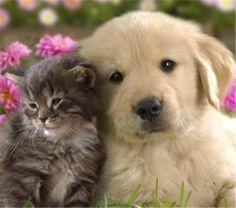 cute animal cutely animals