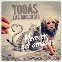 Todas las mascotas merecen ser amadas. Cuéntanos tu experiencia con tu mascota https://www.facebook.com/ciudadmascotas
