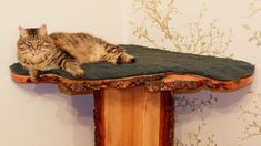 Sakima loves his shelf and can see the whole room and out into the garden Cat Shelves, Shelf, Wooden Cat, Pixie Bob, New Homes, Cats, Outdoor Decor, Garden, Room
