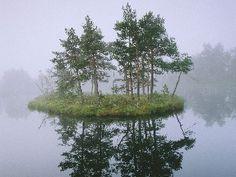 Free Pine Forest, Vastmanland, Sweden Wallpaper - Download The Free Pine Forest, Vastmanland, Sweden