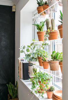 Window Shelf For Plants, Indoor Plant Shelves, Window Shelves, Indoor Window Planter, Shelves For Plants, Pots For Plants, Indoor Plant Wall, Blue Plants, Balcony Plants