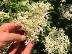 Natural Medicine, Beauty Hacks, Beauty Tips, How To Dry Basil, Herbs, Nature, Naturaleza, Beauty Tricks, Herb