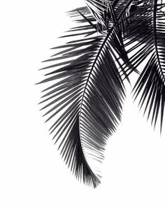 Palm tree leaf silhouette