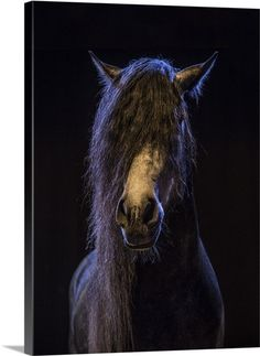 Rare show horse in the Camargue region in the South of France