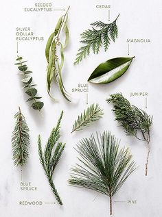 Greenery staples such as pine magnolia eucalyptus and juniper make for stunning holiday greenery arrangements. Greenery staples such as pine magnolia eucalyptus and juniper make for stunning holiday greenery arrangements. Winter Wedding Decorations, Tree Decorations, Christmas Decorations, Winter Wedding Flowers, Winter Weddings, Winter Wedding Ideas Diy, Wedding Ideas Green, Christmas Wedding Decorations, Christmas Garlands