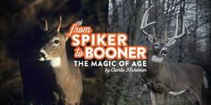 Witness the incredible transformation of a whitetail's antlers from unimpressive spike buck to majestic Booner to old age over a period of 12 years. Big Deer, Deer Mounts, Amphibious Vehicle, Whitetail Bucks, Hunting Tips, Old Age, White Tail, Fishing Tips, Antlers