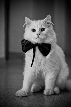 Felines busting out their bowties? That's glam.