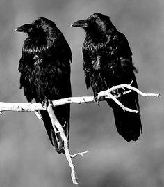Tumblr_mbwhb65jza1r6yy2qo1_500_large Beautiful birds. The Neonwoman
