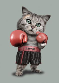 "Unisex ""Boxing Cat"" Tee by Adam Lawless (White) Cute Baby Cats, Cute Little Animals, Cute Funny Animals, Cute Cat Wallpaper, Animal Wallpaper, Cute Cartoon Pictures, Funny Animal Pictures, Cat Posters, Cute Animal Drawings"