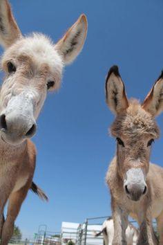 Longhopes Donkey Shelter
