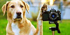 Hunde in Werbespots | hunde-magazin.ch