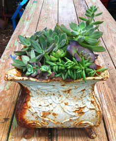 Iron Planter Succulents