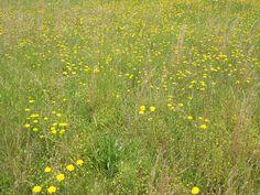 beautyeveryday - Southern Beauty, Creativity, and Food - yellowfields