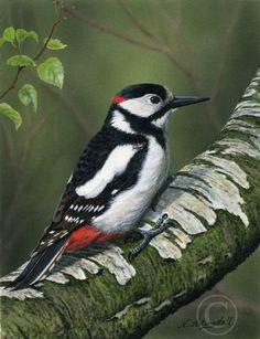 British-wildlife original art and prints Garden Animals, Nature Animals, Animals And Pets, British Wildlife, Wildlife Art, Beautiful Birds, Animals Beautiful, Spotted Woodpecker, Pretty Animals