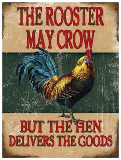 Rooster May Crow, Funny Comedy Chicken, House, Pub, Small Metal/Tin Sign Picture in Collectables, Advertising, Signs   eBay
