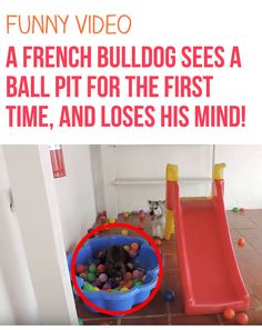 OMG this made my day! #frenchbulldogs #dogs #funny