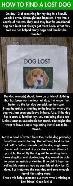 Tips on How to Find a Lost Dog. Leave the following things where the dog was last seen: • An article of clothing of the owner's, the smellier the better  • A favorite toy • A bowl of water, but not food (it attracts other animals). Infographic. Instructable. Misc info
