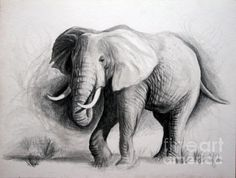 elephant drawings | Elephant Drawing by Jeff Noble - Elephant Fine Art Prints and Posters ...