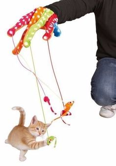 Find Pet Accessories in Randburg! Search Gumtree Free Classified Ads for Pet Accessories and more in Randburg. Playpen, Pet Accessories, Pet Products, Mice, Baby Animals, Gloves, Pets, Computer Mouse, Baby Pets