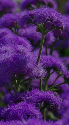 All purple.