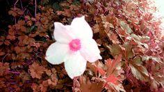 La primavera se resiste al otoño!!