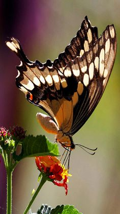 Butterfly........nice Photography