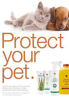 PROTECT YOUR PET Lavish your pets with the benefits of aloe and contribute to their continued health and wellbeing. Our pet-friendly range cares for your pets and farm animals from the inside out. Forever Living Business, Forever Living Aloe Vera, Best Freinds, Forever Life, Nutrition Sportive, Animal Magic, Forever Living Products, Keeping Healthy, Health And Wellbeing