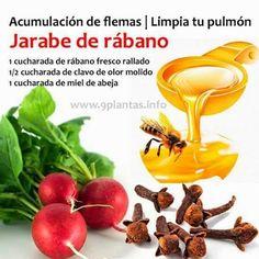 El jarabe de rábano es un poderoso antioxidante que puede ayudar con la tos, la bronquitis y la tos ferina. Tan solo debemos combinar una cucharada de rábano fresco rallado (las variedades negras son las más efectivas), media cucharadita de clavo de olor molido y una cucharada de miel de abeja. Añadimos todos los ingredientes …