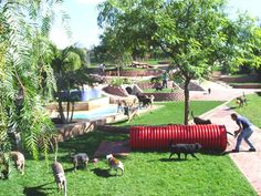 Outdoor Dog Boarding Ranch in the Hills Topanga California - ultimate doggy playground Dog Boarding Kennels, Pet Boarding, Indoor Dog Park, Dog Backyard, Pet Paradise, Dog Playground, Dog Yard, Pet Hotel, Pet Resort