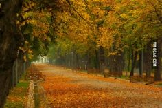 If autumn is a thing now... I give you Cluj, in Transilvania.