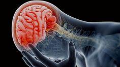#Descubren el mecanismo que utiliza el cerebro para eliminar neuronas muertas - Globovisión: Globovisión Descubren el mecanismo que utiliza…