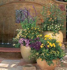 Jardim em vasos. Atrai borboletas e beija-flores.