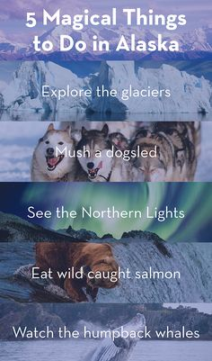 Who couldn't use a bit more magic in their lives? Get special offers on cruises to Alaska with Holland America Line. http://www.hollandamerica.com/pageByName/Resp.action?requestPage=Alaska&WT.mc_id=SM_Pinterest&crlt.pid=camp.MAWLXmK5uLTV