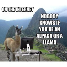 The 9 Funniest Llama Memes: Kendrick Llama, Llama Del Rey, and More