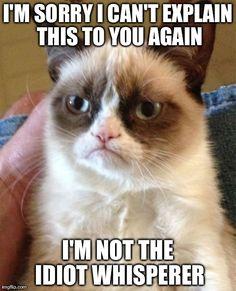 #GrumpyCat #meme For more Grumpy Cat stuff, gifts, and meme visit www.pinterest.com/erikakaisersot. LOL!!!