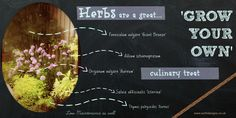 Low Maintenance Garden - Herb gardens give you a bit of 'Grow your Own' - Earth Designs Garden Design and Build