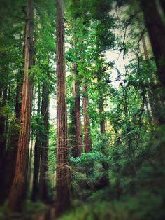 #muirwoods #sanfrancisco #bayarea #nature